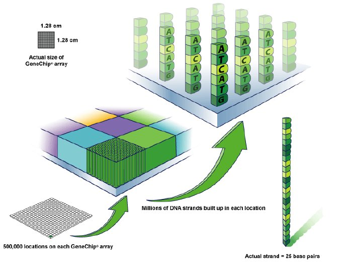 dna chip 34 resonance ⎜december 2000 general ⎜article this article presents a brief overview of dna chips, or microarrays microarrays are a very significant technologi.